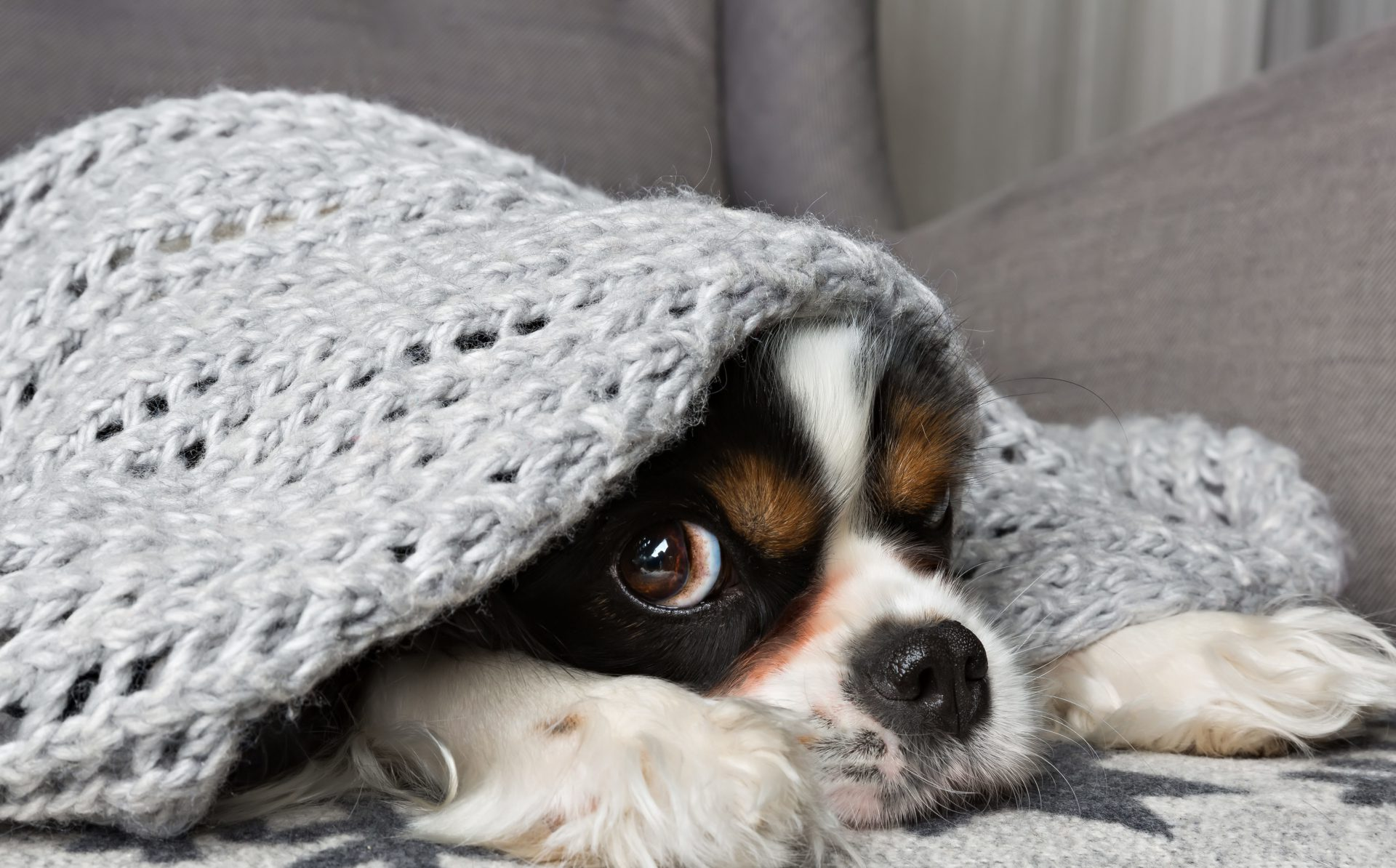 What is Storm Phobia Blog Header Image Cute dog Under Gray Blanket
