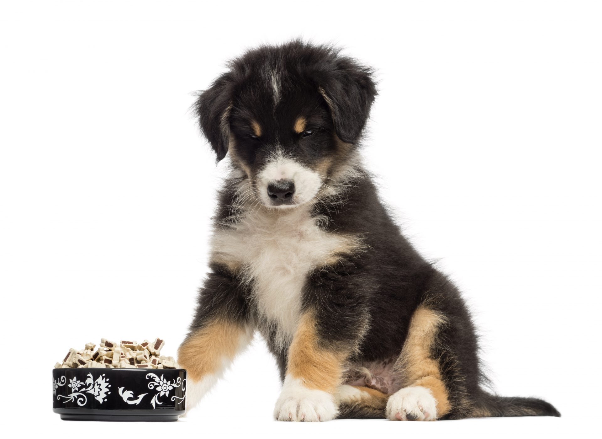 Foods Dogs Shouldn't Eat Dog with Bowl of Food Image